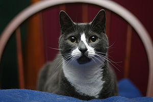 Press photo of Sockington.